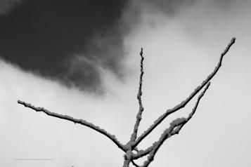 Sky Branch