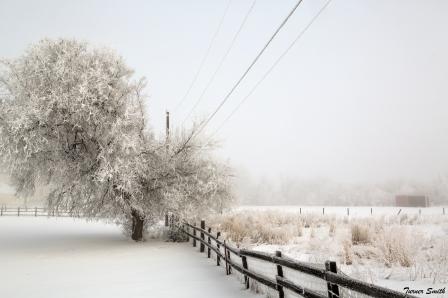 A Winter's Morn